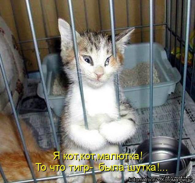 Котоматрица: Я кот,кот,малютка! То что тигр-  была шутка!...