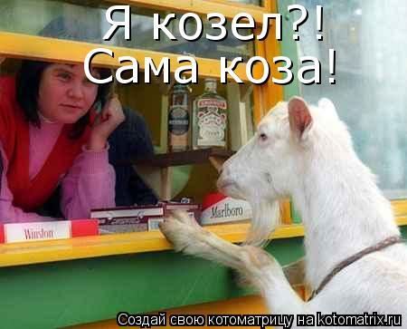 Котоматрица: Я козел?! Сама коза!