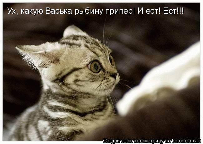Котоматрица: Ух, какую Васька рыбину припер! И ест! Ест!!!