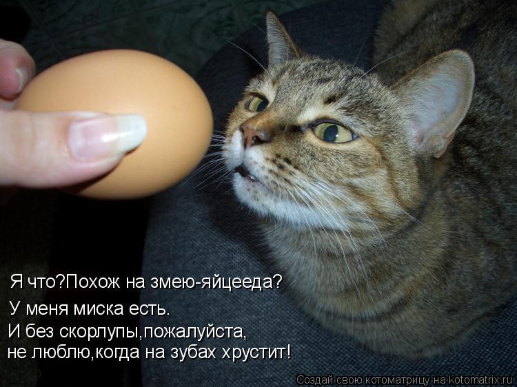 Котоматрица: Я что?Похож на змею-яйцееда? У меня миска есть. И без скорлупы,пожалуйста, не люблю,когда на зубах хрустит!