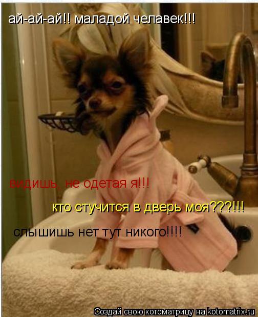 Котоматрица: ай-ай-ай!! маладой челавек!!! кто стучится в дверь моя???!!!  видишь, не одетая я!!! слышишь нет тут никого!!!!