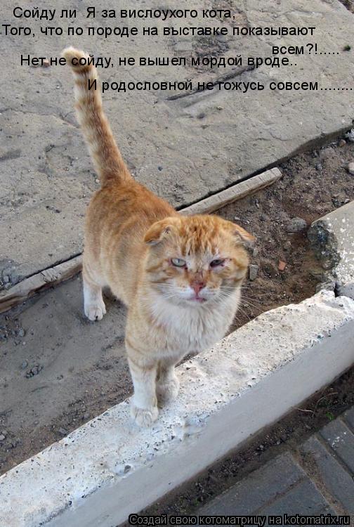 Котоматрица: Сойду ли  Я за вислоухого кота,  Того, что по породе на выставке показывают всем?!..... Нет не сойду, не вышел мордой вроде.. И родословной не гож