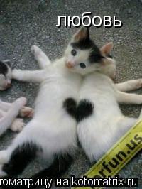Котоматрица: любовь