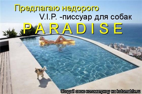 Котоматрица: Предлагаю недорого  V.I.P. -писсуар для собак  P A R A D I S E