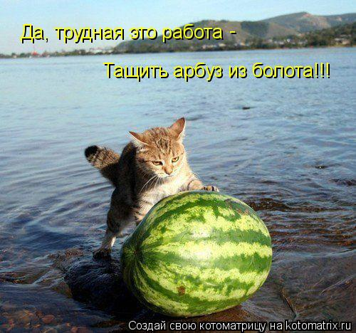 Котоматрица: Да, трудная это работа Тащить арбуз из болота!!! -