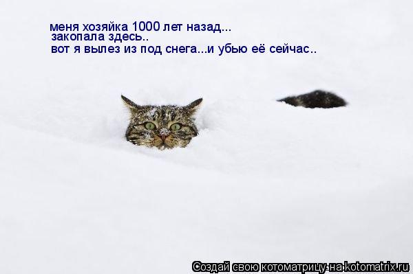 Котоматрица: меня хозяйка 1000 лет назад... закопала здесь.. вот я вылез из под снега...и убью её сейчас..