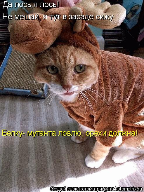 Котоматрица: Да лось,я лось! Не мешай, я тут в засаде сижу Белку- мутанта ловлю, орехи должна!