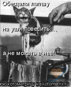 Котоматрица: Обещали лапшу  на уши повесить..., а не мокать в неё!