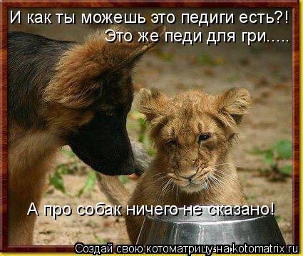 Котоматрица: И как ты можешь это педиги есть?! Это же педи для гри..... А про собак ничего не сказано!