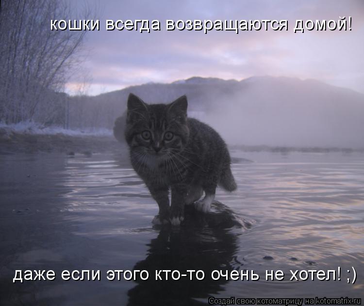 Котоматрица: кошки всегда возвращаются домой! даже если этого кто-то очень не хотел! ;)