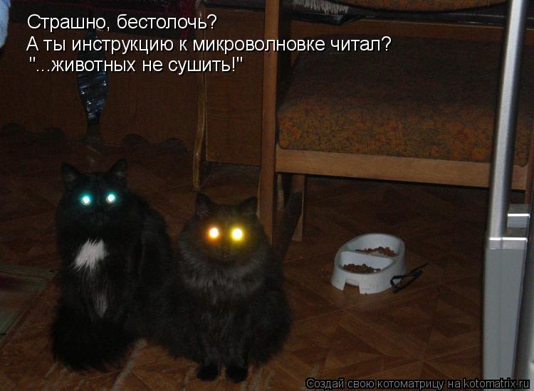 """Котоматрица: Страшно, бестолочь? А ты инструкцию к микроволновке читал? """"...животных не сушить!"""""""
