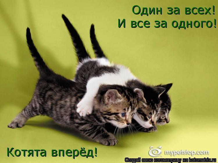 Котоматрица: Один за всех! И все за одного! Котята вперёд!