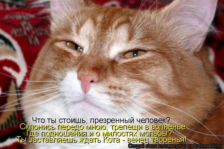 Котоматрица: Что ты стоишь, презренный человек? Склонись передо мною, трепещи в волненье . Где подношения и о милостях мольбы? Ты заставляешь ждать Кота -