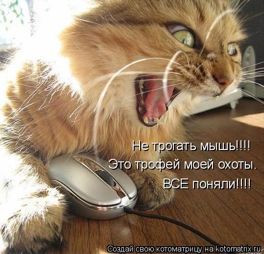 Котоматрица: Не трогать мышь!!!!  Это трофей моей охоты. ВСЕ поняли!!!!