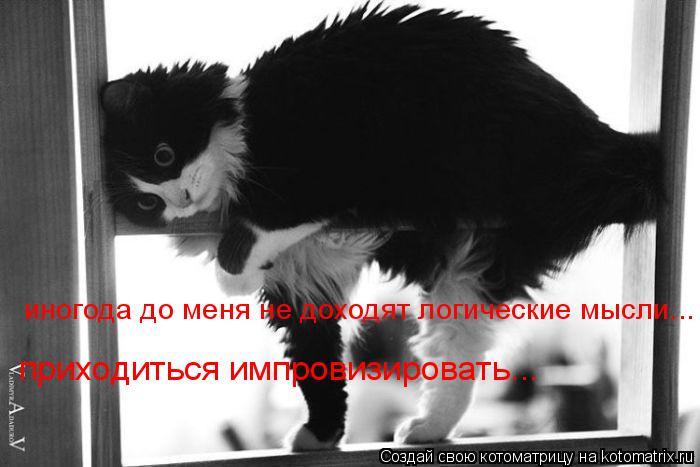 Котоматрица: иногода до меня не доходят логические мысли... приходиться импровизировать...