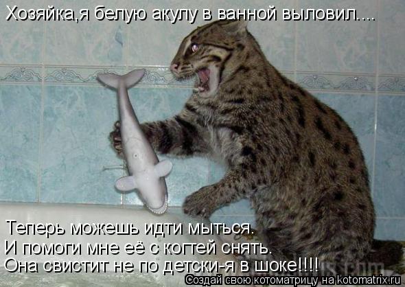 Котоматрица: Хозяйка,я белую акулу в ванной выловил.... Теперь можешь идти мыться. И помоги мне её с когтей снять. Она свистит не по детски-я в шоке!!!!