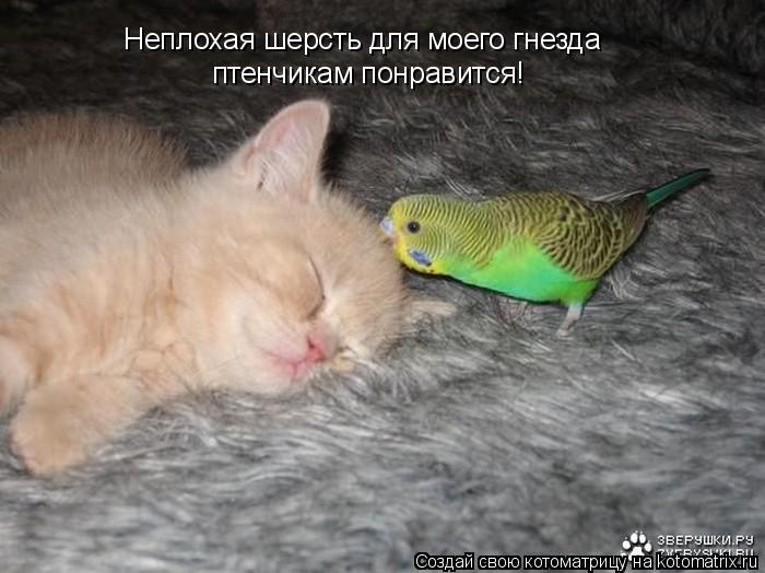 Котоматрица: Неплохая шерсть для моего гнезда птенчикам понравится!