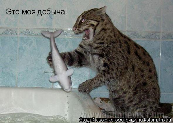 Котоматрица: Это моя добыча!