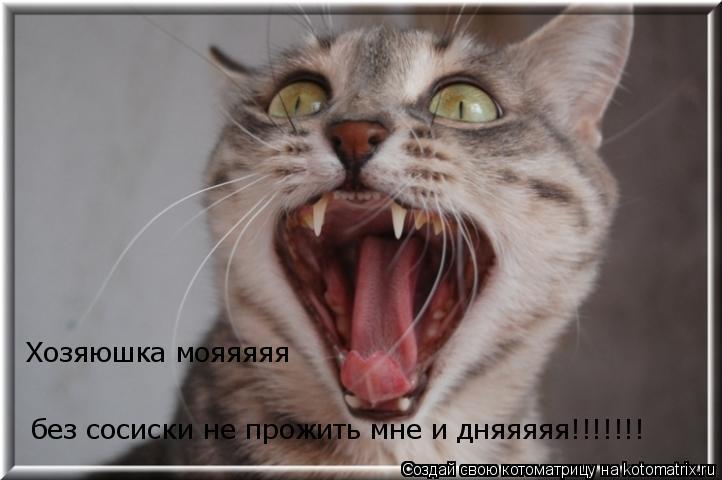Котоматрица: Хозяюшка мояяяяя без сосиски не прожить мне и дняяяяя!!!!!!!