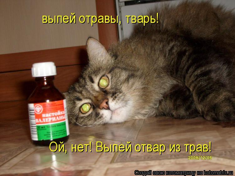 Котоматрица: выпей отравы, тварь!  Ой, нет! Выпей отвар из трав!