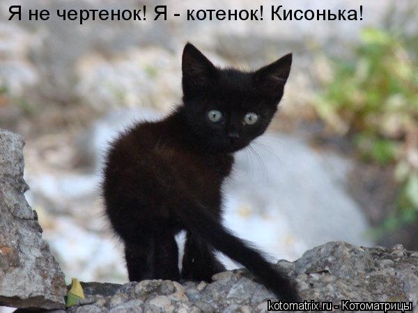 Котоматрица: Я не чертенок! Я - котенок! Кисонька!