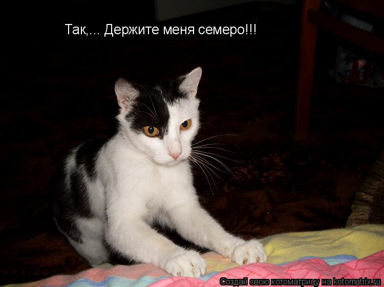 Котоматрица: Так,... Держите меня семеро!!!
