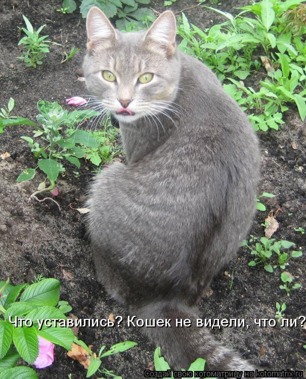 Котоматрица: Что уставились? Кошек не видели, что ли?