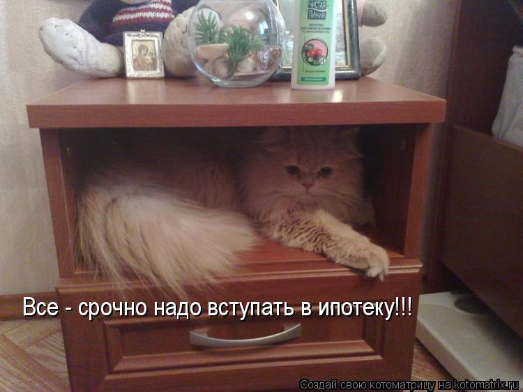 Котоматрица: Все - срочно надо вступать в ипотеку!!!