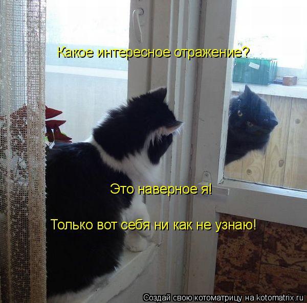 Котоматрица: Какое интересное отражение? Это наверное я! Только вот себя ни как не узнаю!
