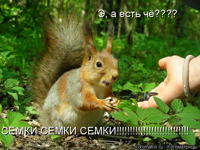 Котоматрица: Э, а есть чё???? СЕМКИ СЕМКИ СЕМКИ!!!!!!!!!!!!!!!!!!!!!!!!!!!
