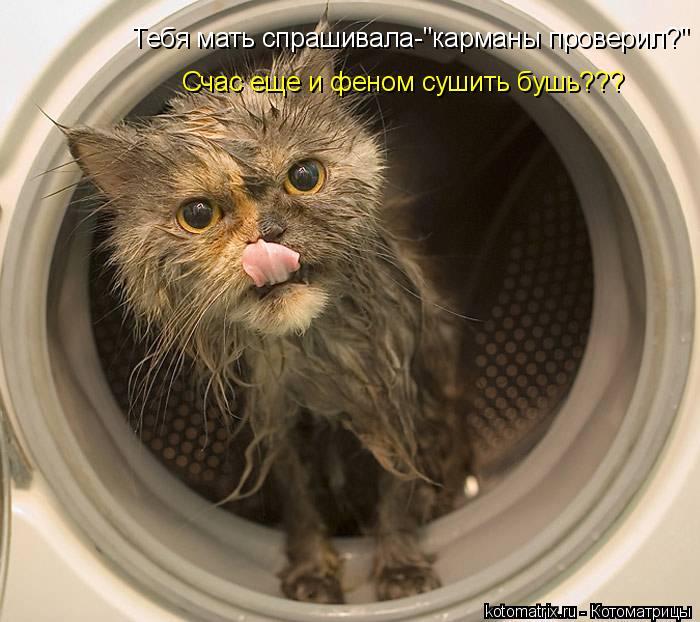 """Котоматрица: Тебя мать спрашивала-""""карманы проверил?"""" Счас еще и феном сушить бушь???"""