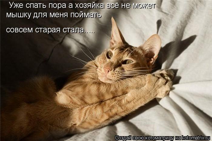 Котоматрица: Уже спать пора а хозяйка всё не может  мышку для меня поймать совсем старая стала.....