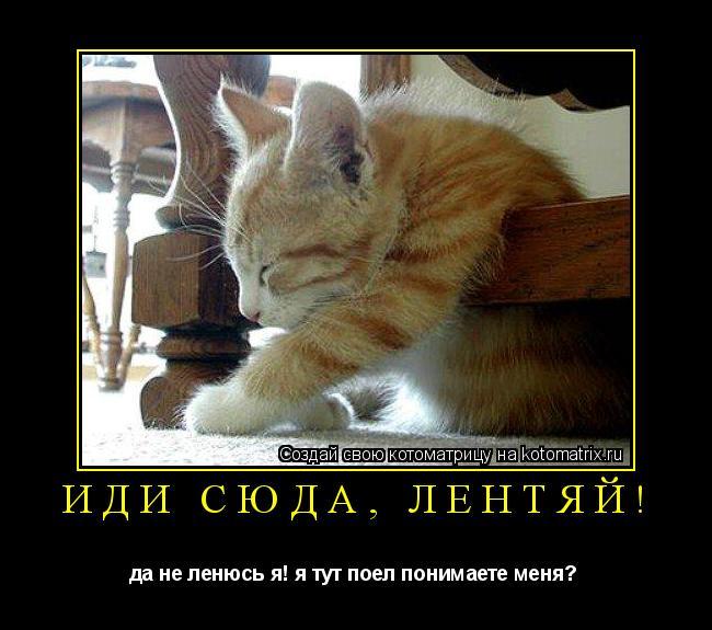 Котоматрица: иди сюда, лентяй! да не ленюсь я! я тут поел понимаете меня?