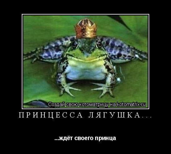 Котоматрица: Принцесса лягушка... ...ждёт своего принца