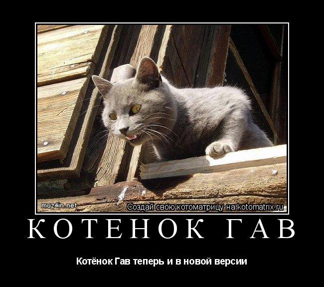 Котоматрица: Котёнок Гав Котёнок Гав теперь и в новой версии