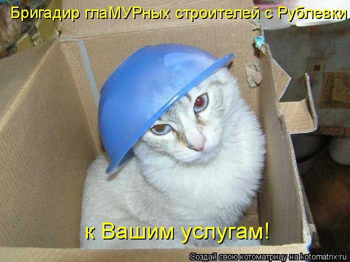 Котоматрица: Бригадир глаМУРных строителей с Рублевки к Вашим услугам!