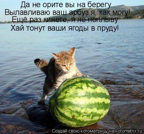 Котоматрица: Да не орите вы на берегу.. Вылавливаю ваш арбуз я, как могу! Ещё раз кинете, я не поплыву Хай тонут ваши ягоды в пруду!