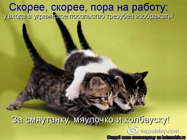 Котоматрица: Скорее, скорее, пора на работу: у входа в украинское посольство трезубец изображать! За смяутанку, мяулочко и колбауску!