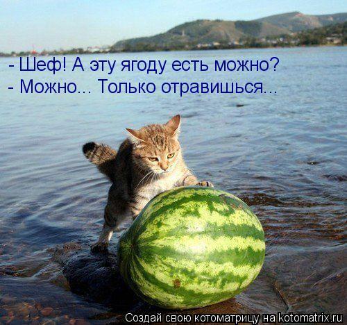 Котоматрица: - Шеф! А эту ягоду есть можно? - Можно... Только отравишься...