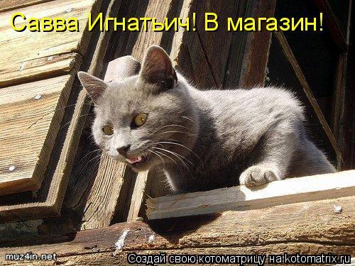 Котоматрица: Савва Игнатьич! В магазин!