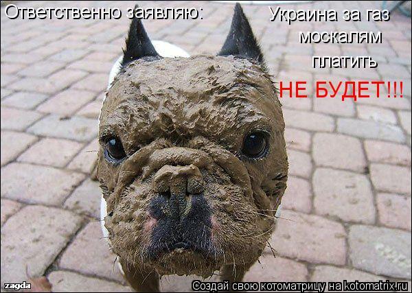 Котоматрица: Ответственно заявляю: Украина за газ  москалям платить НЕ БУДЕТ!!!