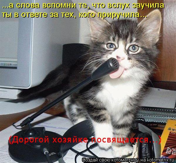 Котоматрица: ...а слова вспомни те, что вслух заучила ты в ответе за тех, кого приручила... (Дорогой хозяйке посвящается...)