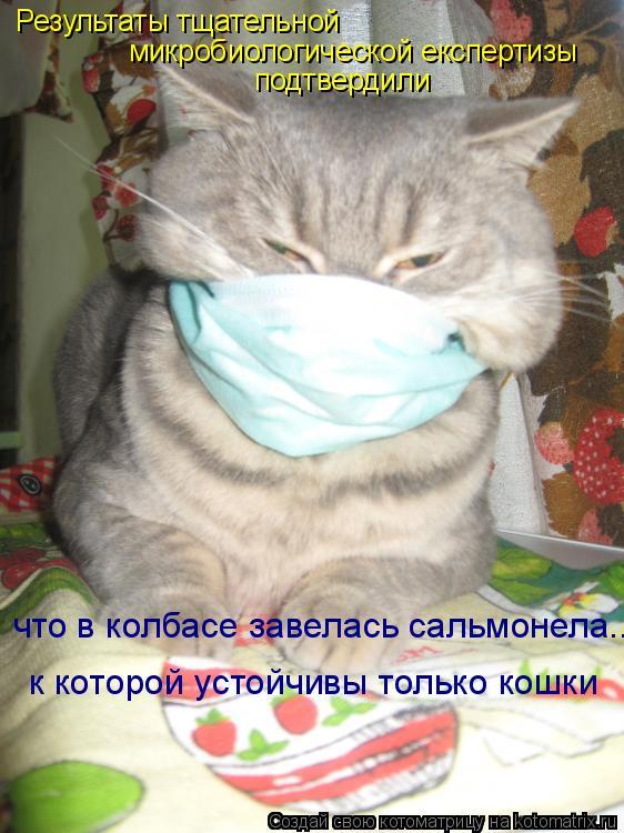 Котоматрица: Результаты тщательной  микробиологической експертизы  подтвердили что в колбасе завелась сальмонела... к которой устойчивы только кошки