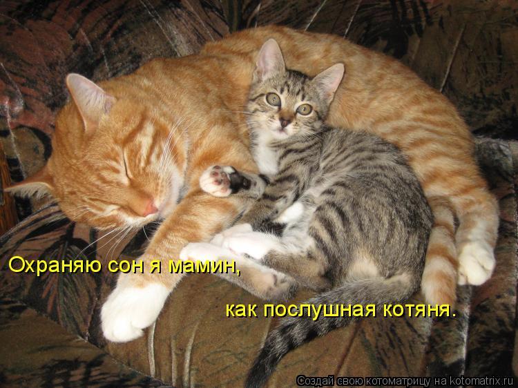 Котоматрица: Охраняю сон я мамин, как послушная котяня.