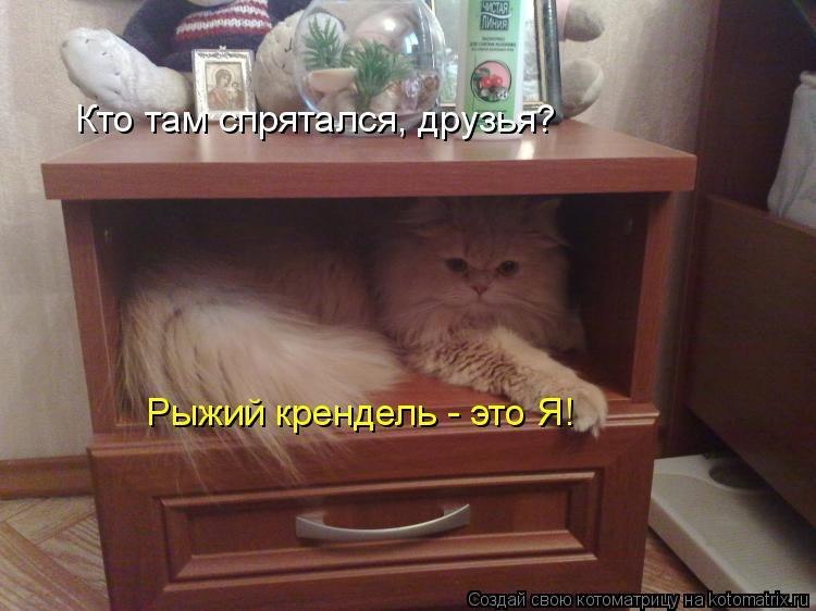 Котоматрица: Кто там спрятался, друзья? Рыжий крендель - это Я!