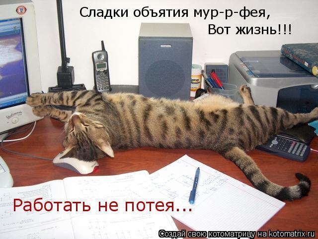 Котоматрица: Сладки объятия мур-р-фея, Вот жизнь!!! Работать не потея...