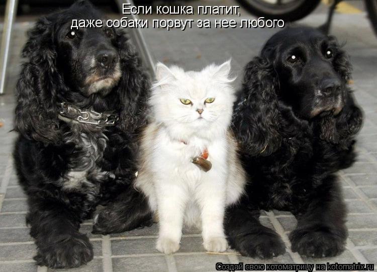 Котоматрица: Если кошка платит, даже собаки порвут за нее любого