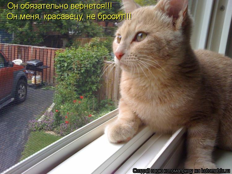Котоматрица: Он обязательно вернется!!! Он меня, красавецу, не бросит!!!