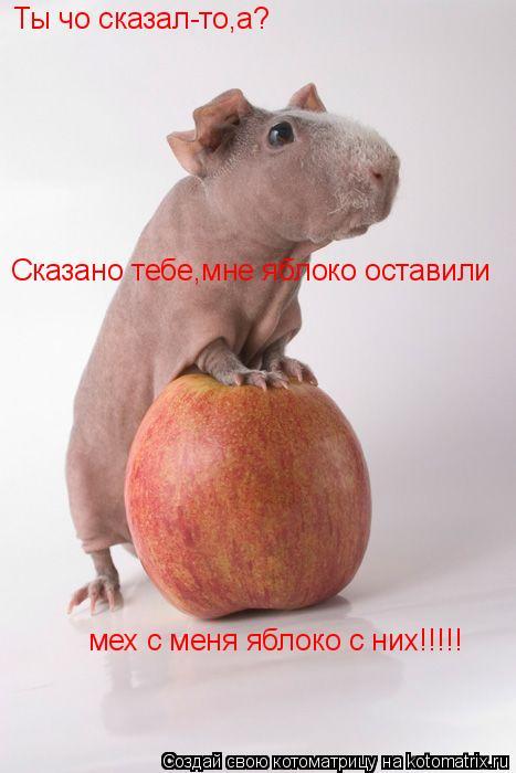 Котоматрица: Ты чо сказал-то,а? Сказано тебе,мне яблоко оставили мех с меня яблоко с них!!!!!