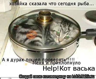Котоматрица: хозяйка сказала что сегодня рыба... А я дурак пошел проверять!!!!! Меня и прихлопнуло Help!Кот васька